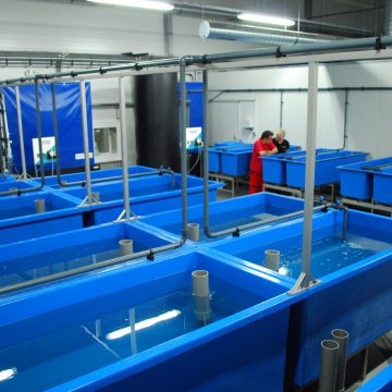 Aquaculture ID African catfish hatchery for Agro Rybia Farma